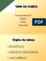 Anatomia Cabeca