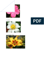 15 Tipos de Flores
