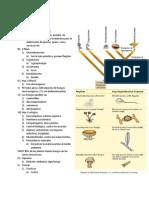 repaso para examén micologia