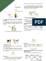 Elaboracion de Queso Estilo Suizo