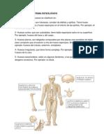 CLASIFICACIÓN SISTEMA OSTEOLÓGICO