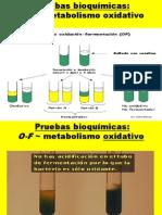 pruebasbioquimicas para identificacion bacteriana.ppt