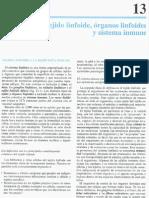 Cap_13-Tejido_linfoide,órganos_linfoides_y_sistema_inmune