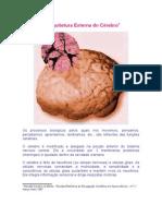 A Arquitetura Externa Do Crebro.doc
