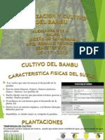 Fertilizacion Del Bambu