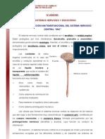 13 Organizacion Anatomofuncional Del Sistema Nervioso Central SNC Lectura