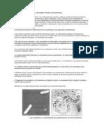 Procariotas.pdf