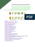 Perbedaan Ciri Morfologi Dan Anatomi Tanaman Monokotil Dengan Dikotil