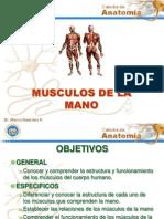 12musculos de La Mano