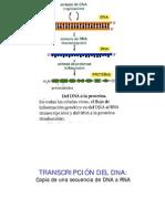 23316292 Biologia Celular Clase 13