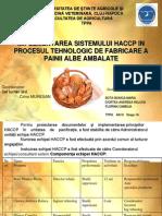 haccp paine