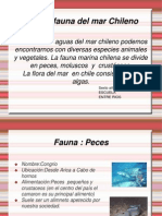 Floras y Fauna Marina