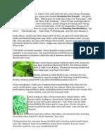 Binahong Dan Khasiatnya.pdf