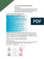 Embriologia Del Aparato Respiratorio