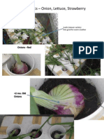 Aquaponics – Onion, Lettuce, Strawberry