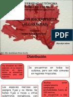 División Rhodopyceae
