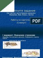Многообразие насекомых 7 кл-1