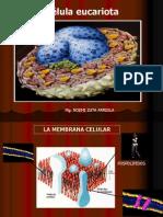 celula2