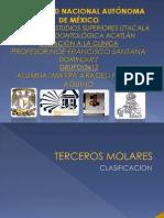 CLASIFICACION TERCEROS MOLARES