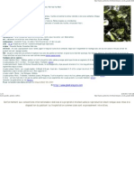 Licula grandis, palmier-cuillère