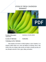 Banana Farming Tanzania