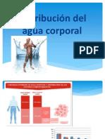 Distribucion de Agua Corporal