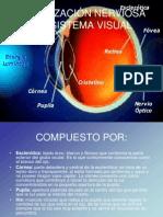 ORGANIZACIÓN NERVIOSA DEL SISTEMA VISUAL.ppt
