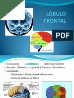 lobulo-frontal.ppt