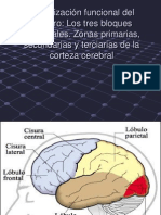 Organizacion-Funcional-Del-Cerebro.ppt