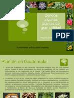 Plantas Medicinales y Otros