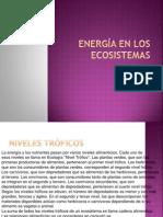 Exposicion Ecologia Cadenas Troficas