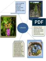 Mapa Mental Bio.