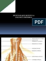 Musculos Que Mueven La Columna Vertebral