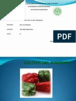 Ficha Tecnica Sobre El Cultivo Del Pimiento