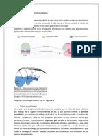 portafolio fonoestomatologia embriologiad