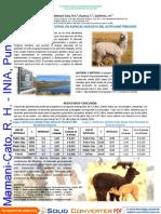 Intervalo Generacional en Alpacas Huacaya Del Altiplano Peruano