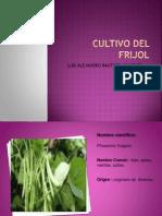 cultivodefrijol-120917194156-phpapp02