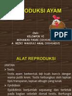 Reproduksi Ayam