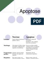 08a_apoptose_1
