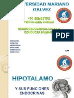 Hipotalamo+y+Sus+Funciones+Endocrinas