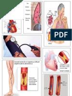 Bazele patologiei clinice