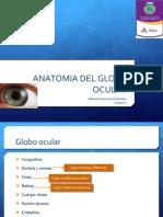 Anatomia Del Globo Ocular1