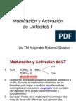 Maduración y Activación de Linfocitos T