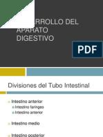 digestivo embrio expo.pptx