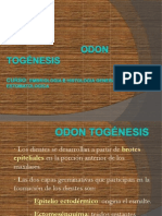 1.4 odontogenesis