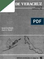 Malvacea en Veracruz