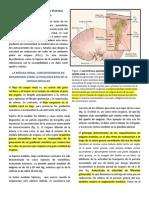 Hipoxia Medula Renal