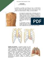 Aula de Anatomia - Siste...ardiovascular - Coração