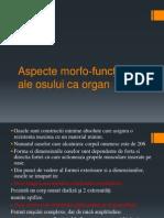 Curs 1. Osul ca Organ