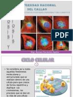 Cap 10 .- Mitosis y Meiosis.pptx